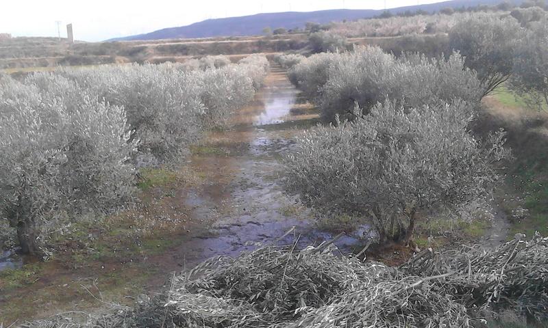 Riego de olivos (Zaragoza) Img_2016
