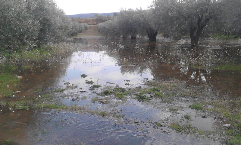 Riego de olivos (Zaragoza) Img_2024