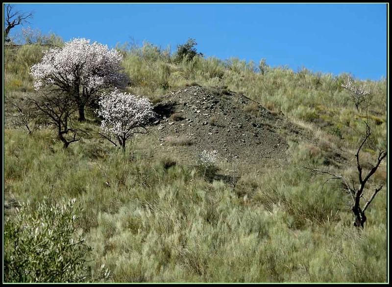 LA HEREDAD (FIÑANA), CTRA. DE ESCULLAR (ABLA), ALMERIA P3082020