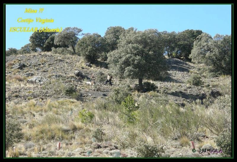 MINAS DEL GENERAL, CORTIJO VIRGINIA, ESCULLAR (Almería) Virc9e10
