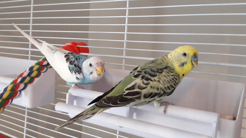 Age de Chipie et Birdy 20170412