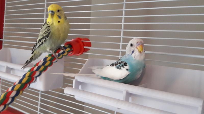 Age de Chipie et Birdy 20170413