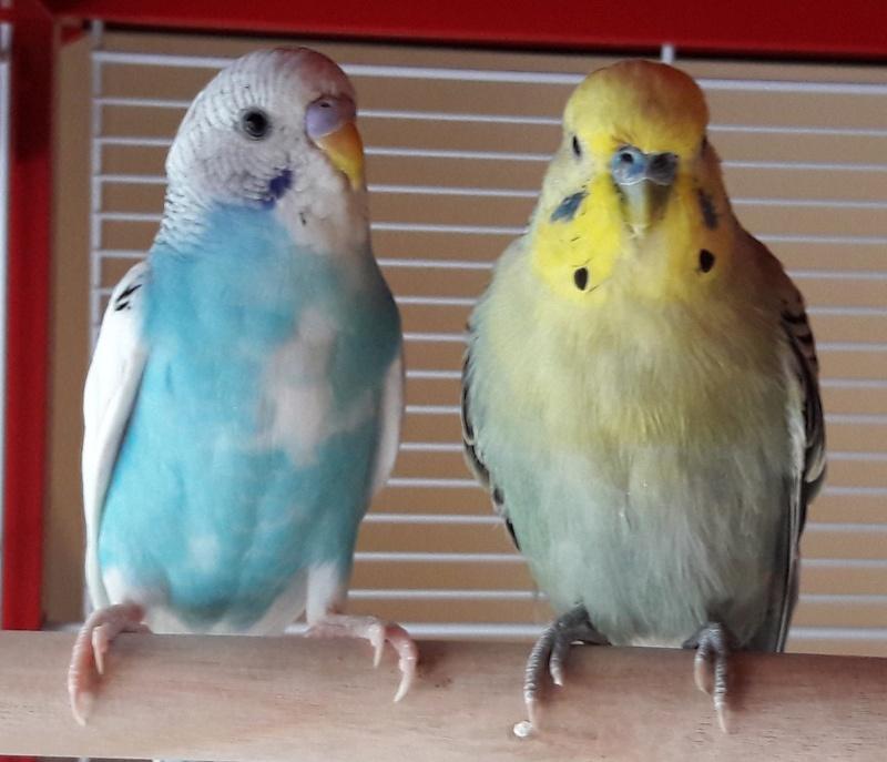 Age de Chipie et Birdy Kkk11