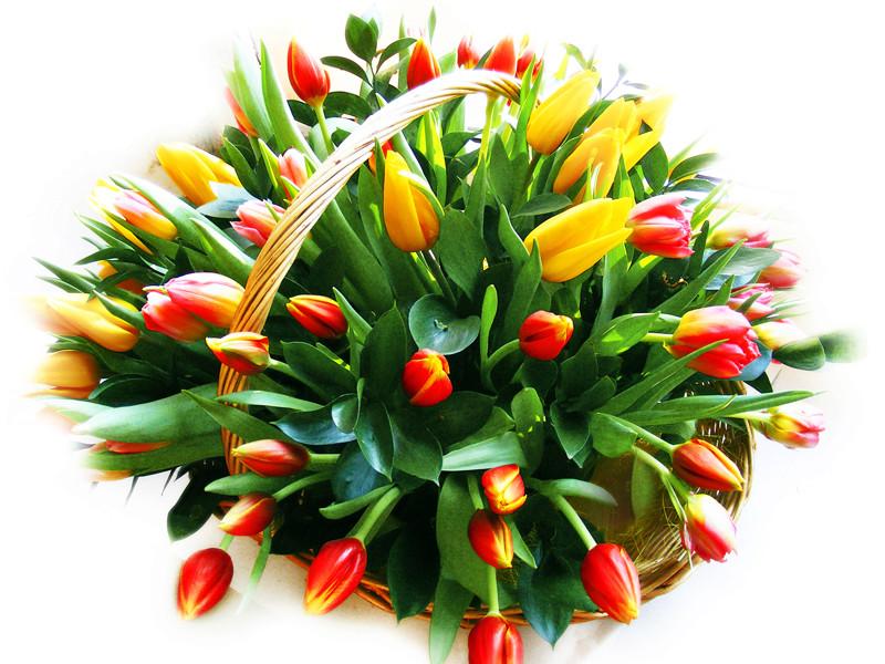 Наши праздники - Страница 6 Tulip-10