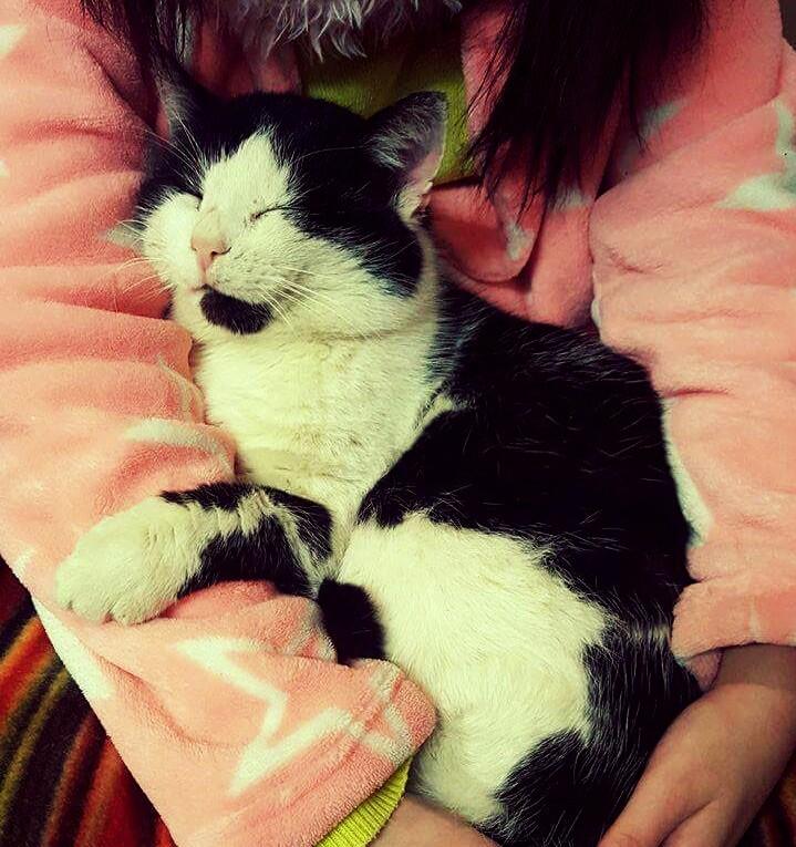 Localiser mon chat perdu Img_2010