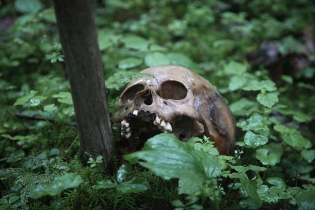 Тибетский лес мёртвых 36wisv10