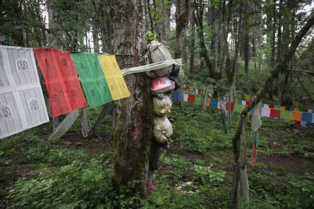 Тибетский лес мёртвых Nj4bb111