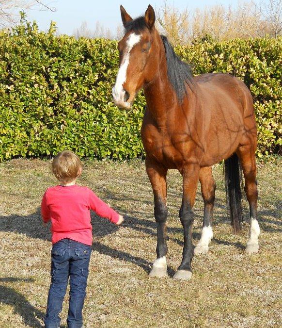 retour de mon cheval à la maison ....  Photo_11
