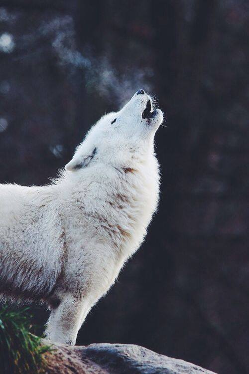 Cosas o imagenes que os parezcan con magia: duendes, ninfas, lobos 10422510