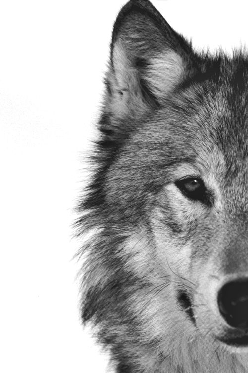Cosas o imagenes que os parezcan con magia: duendes, ninfas, lobos 106e2210