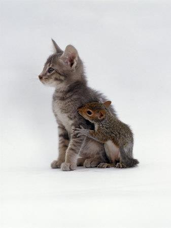 Animales.... 2f04ff10