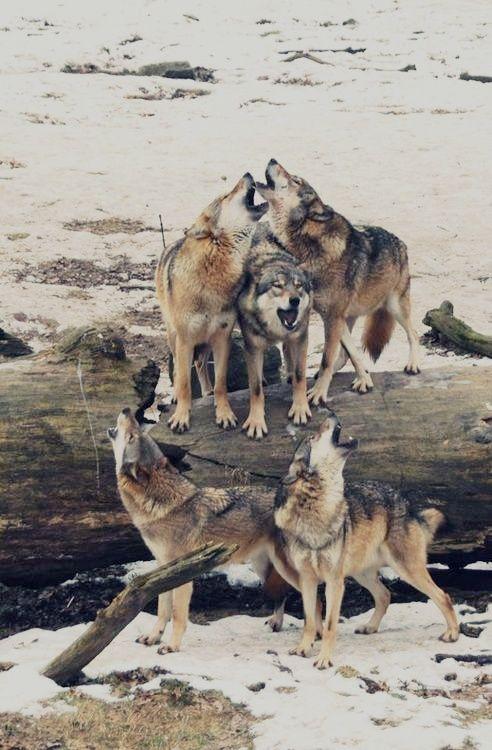 Cosas o imagenes que os parezcan con magia: duendes, ninfas, lobos 87d55b11