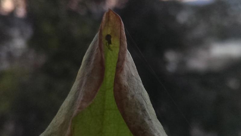 Des petites araignées colonisent mes plantes Imag0019