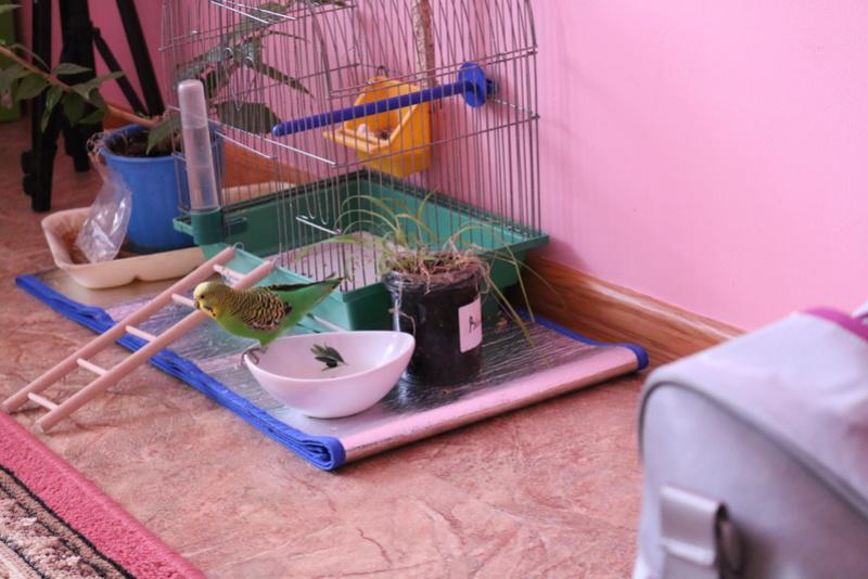 Ветклиники, лаборатории, врачи, принимающие птиц в Киеве. Img_9910