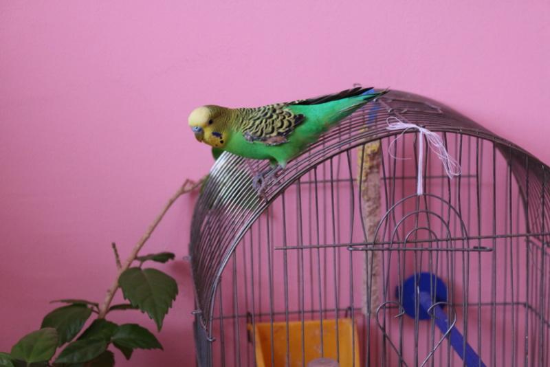 Ветклиники, лаборатории, врачи, принимающие птиц в Киеве. Img_9911