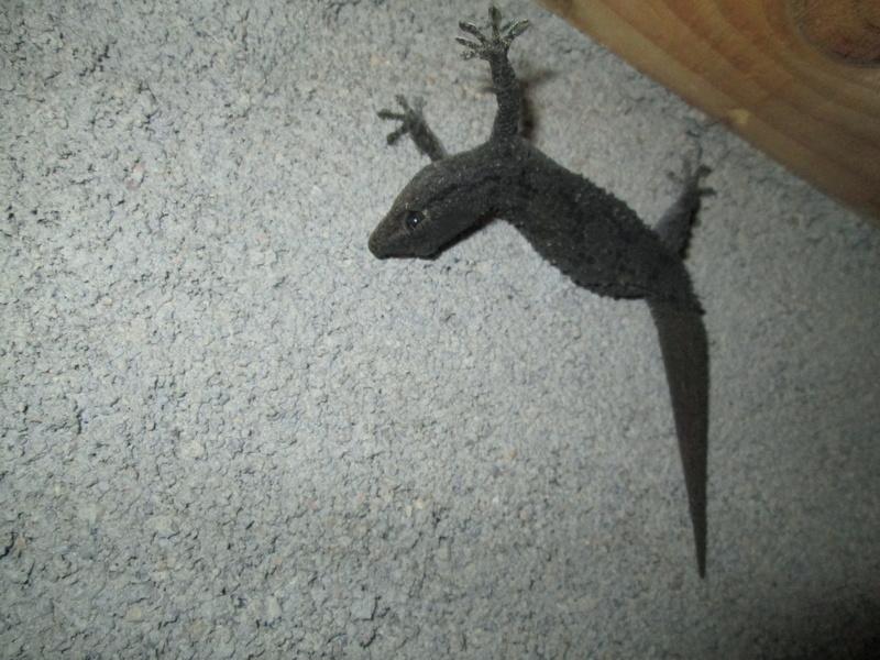 Besoin d'aide pour identification d'un animal Img_3512