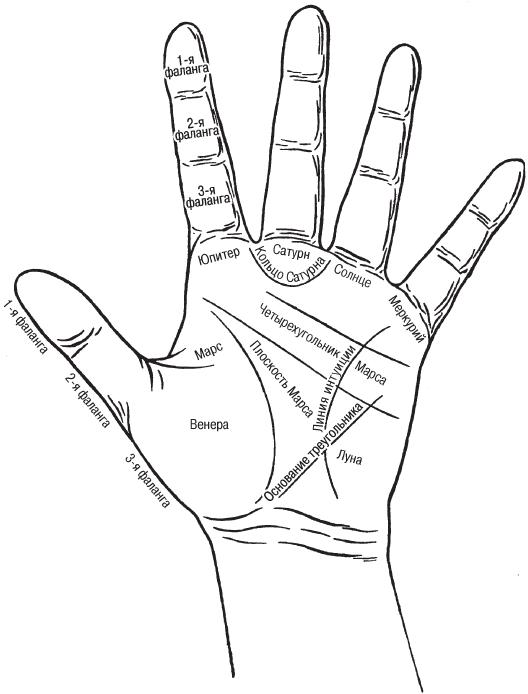 Холмы руки и их значения I_02110