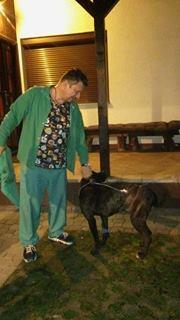 KAWAI magnifique chienne Cane Corso - BULGARIE 17328011