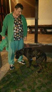 KAWAI magnifique chienne Cane Corso - BULGARIE 17351010