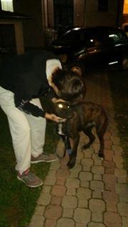 KAWAI magnifique chienne Cane Corso - BULGARIE 17352815
