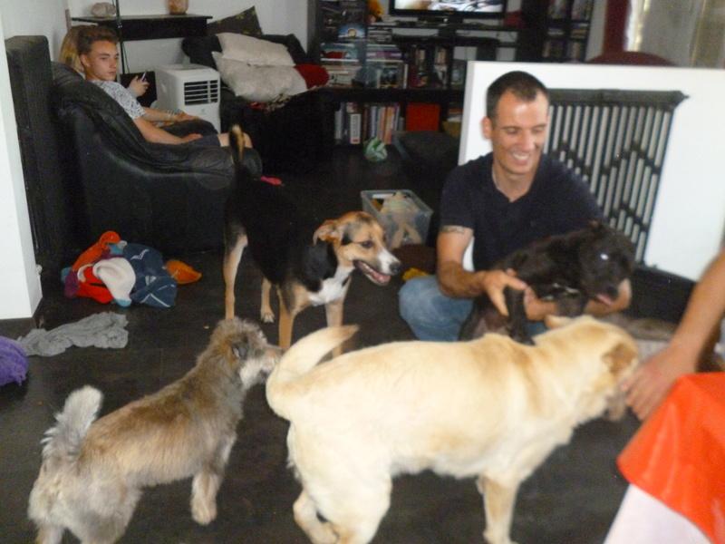 JANGO un des 6 labradors en fourriere - SERBIE P1150014