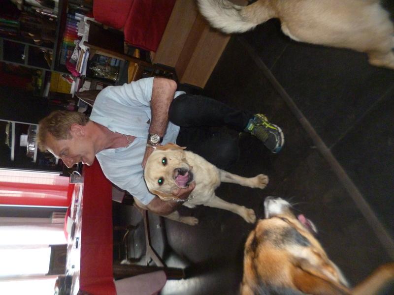 JANGO un des 6 labradors en fourriere - SERBIE P1150118