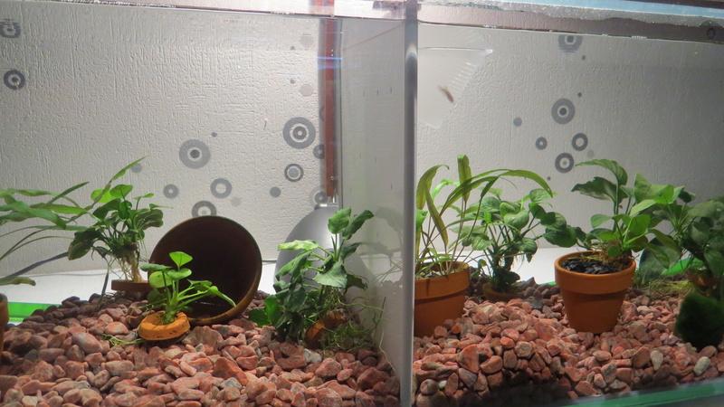 aquarium sur mesure betta Img_0010