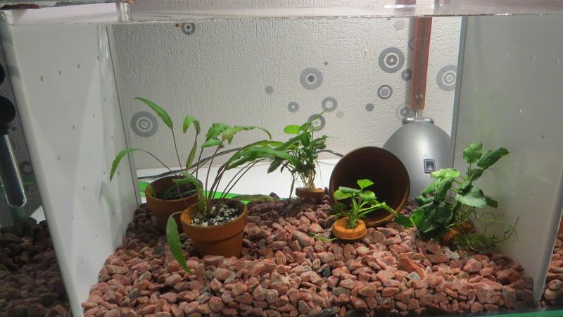 aquarium sur mesure betta Img_0011