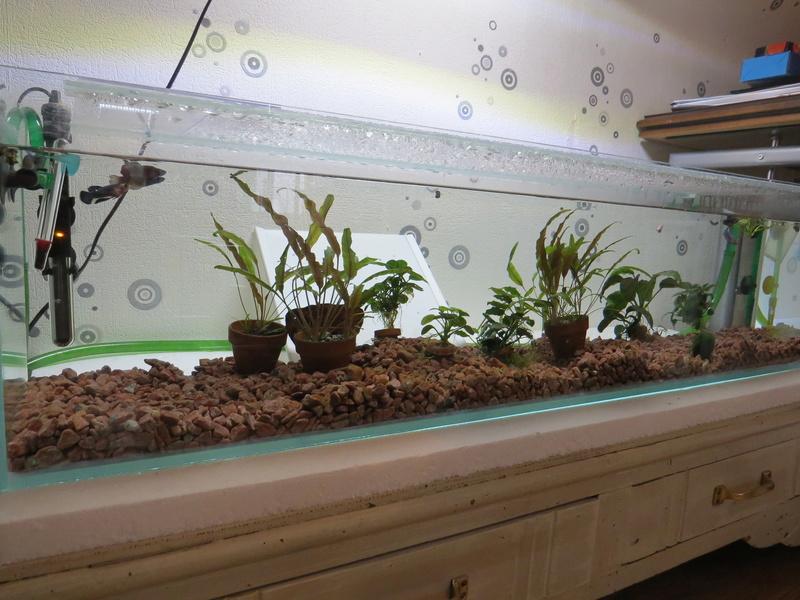 aquarium sur mesure betta Img_0113