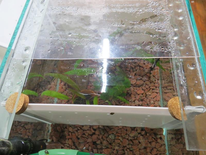 aquarium sur mesure betta Img_0117