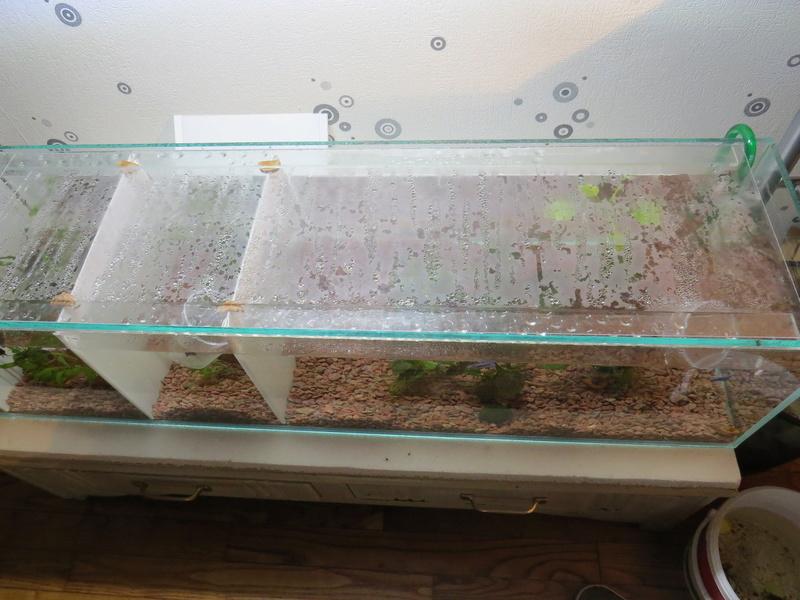 aquarium sur mesure betta Img_0118