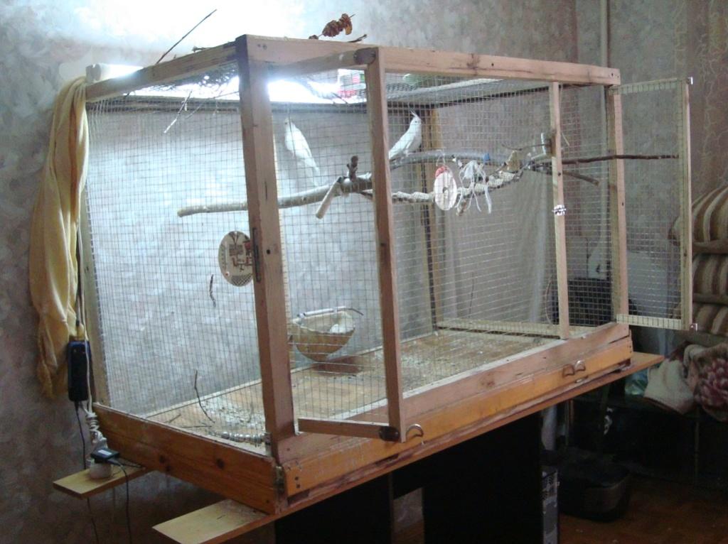 Продам пару попугаев. Белые безщёкие Кареллы Dsc03017