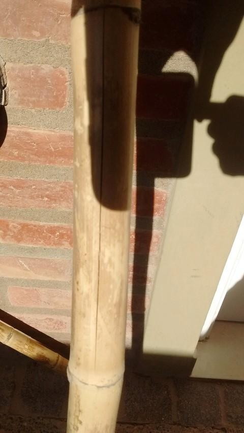Consegui cañas de colihue.... serviran? - Página 2 Img_2011