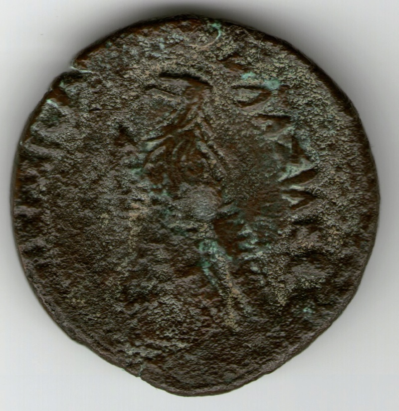 Ptolemo VIII Evergetes II Smg_7619