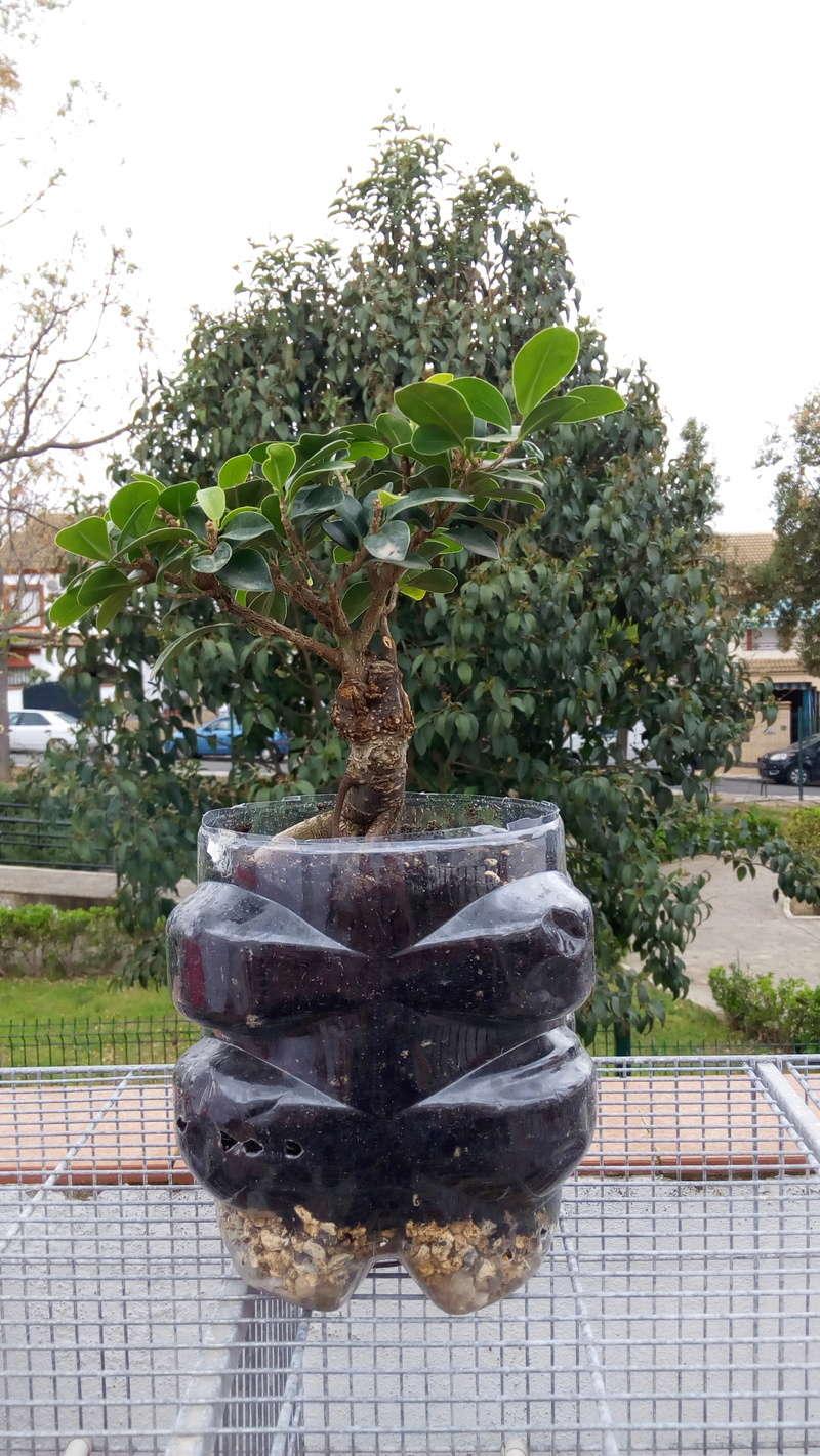 mi primer bonsai Img_2016