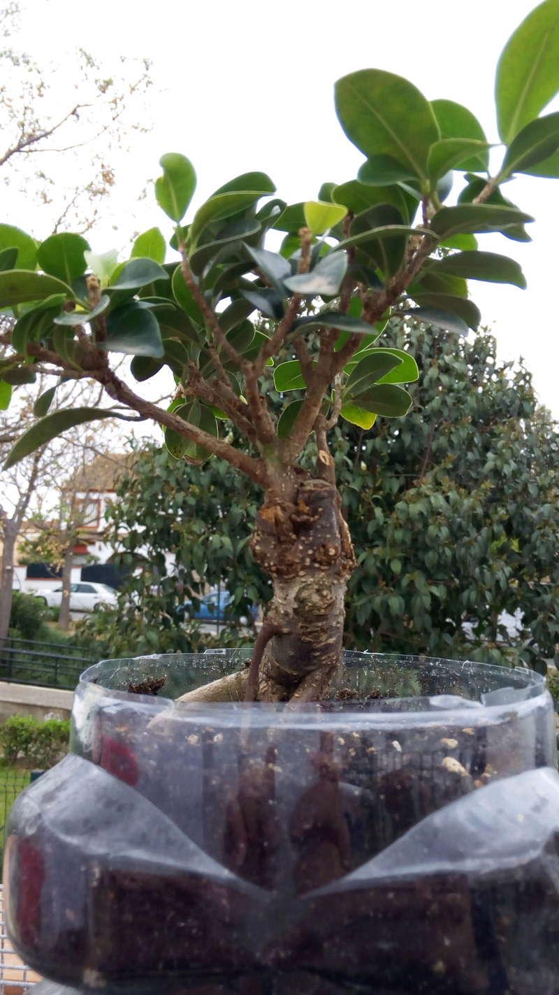 mi primer bonsai Img_2017