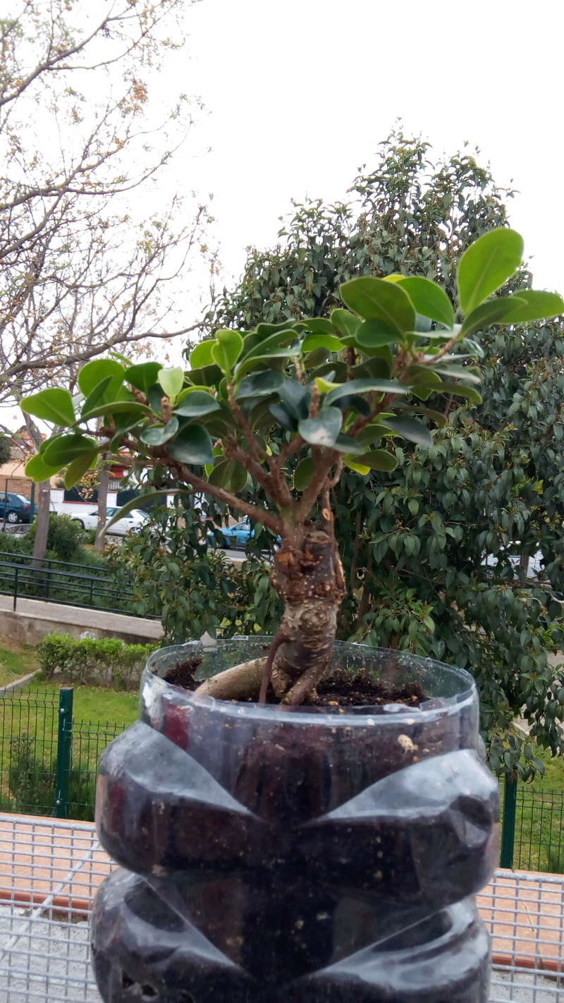 mi primer bonsai Img_2018