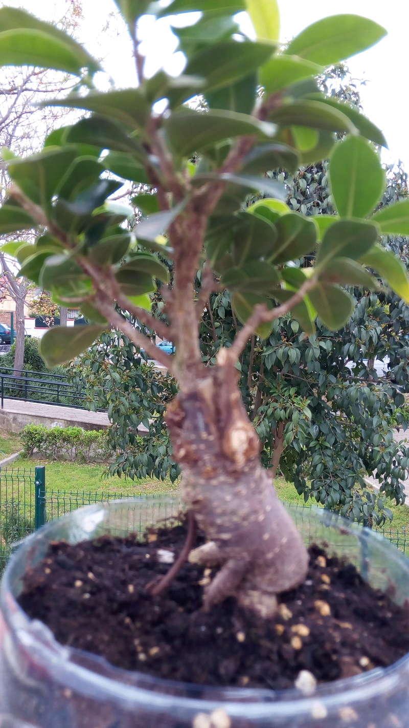 mi primer bonsai Img_2019