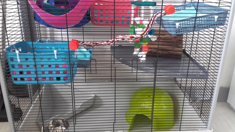 Avis sur ma cage 20170318