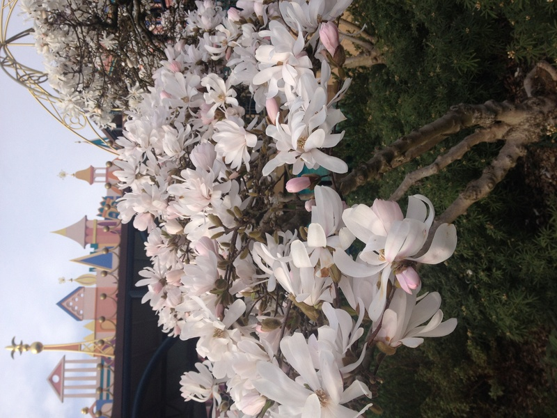 Disneyland Paris : un immense jardin de 80 hectares - Page 2 Img_2511
