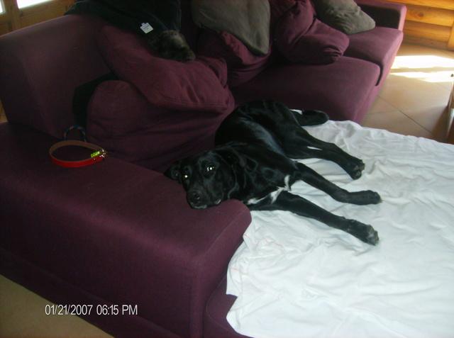 MAX (Labrador noir) Hpim1114