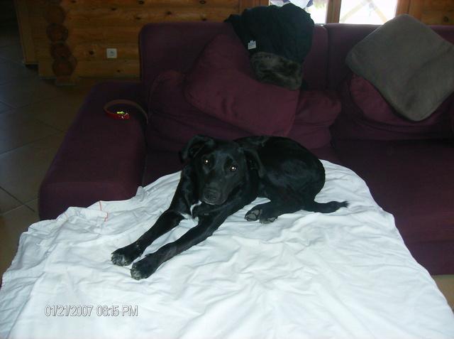 MAX (Labrador noir) Hpim1115