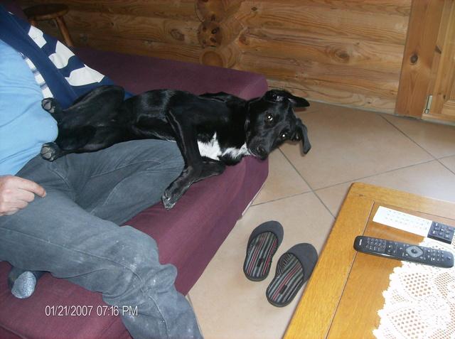 MAX (Labrador noir) Hpim1116