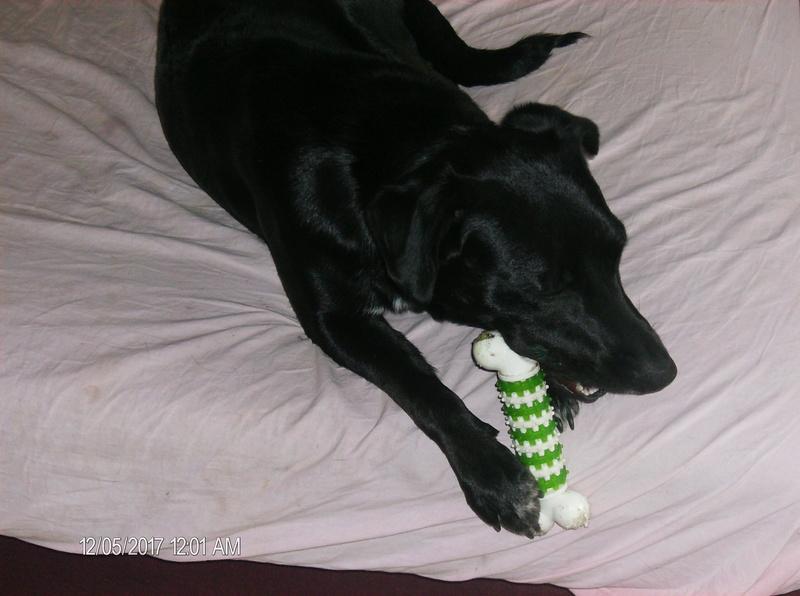 MAX (Labrador noir) Hpim1119