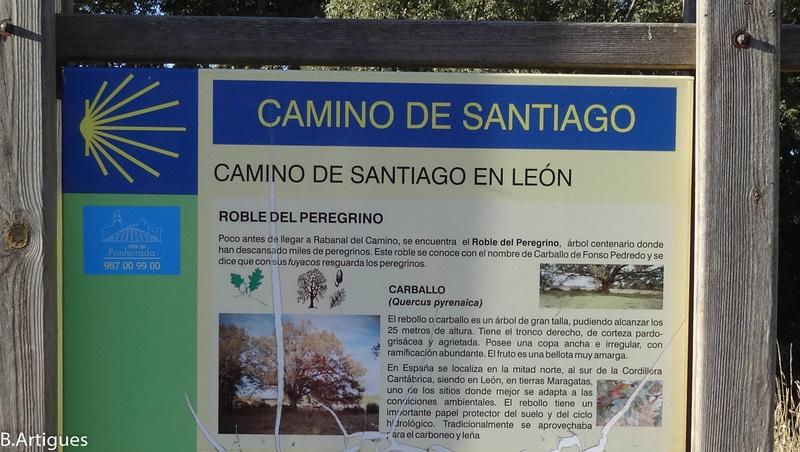 octubre - León - Santiago Octubre 2016 Camino28