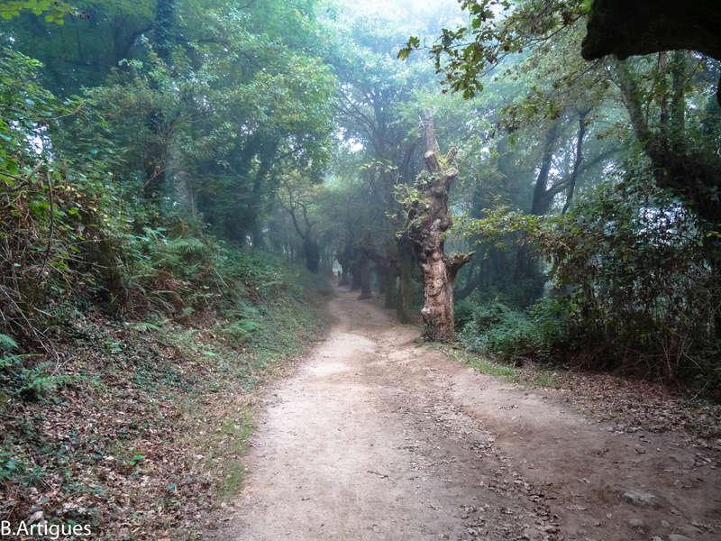 octubre - León - Santiago Octubre 2016 Camino66