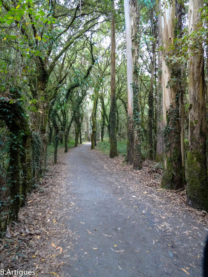 León - Santiago Octubre 2016 Camino84