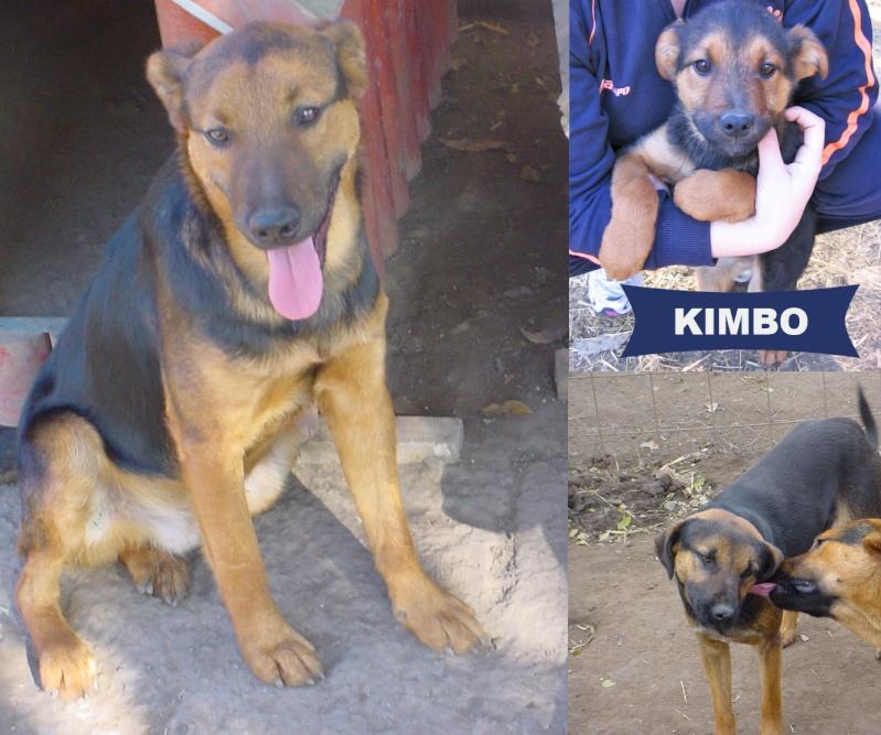 KIMBO - Né 2010 - Timide, il grandit au refuge... - (BELLA) - URGENT : PRET A RENTRER !! - Page 6 Kimbop10