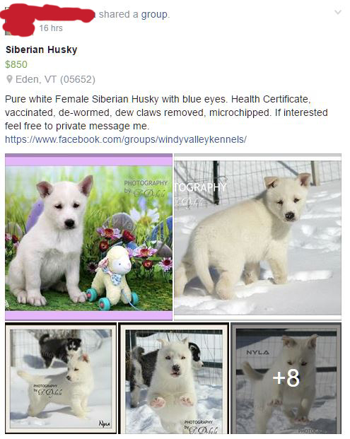 May have finally found my pup! But... thoughts on this breeder?  Edited10