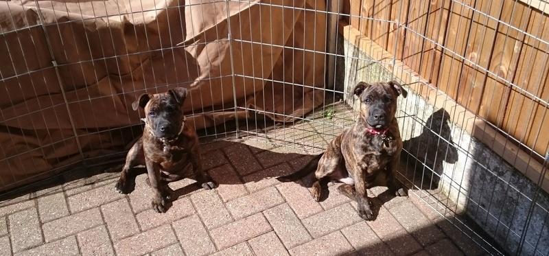 Frankie and Benny enjoying the sunshine yesterday. Fb10